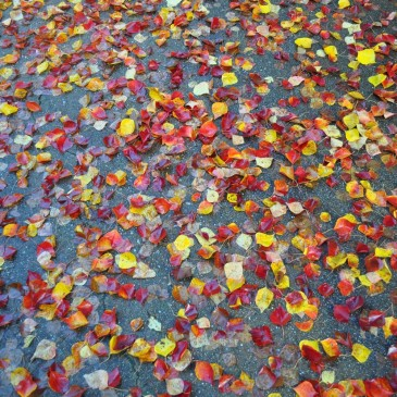 日毎に変わる秋の風景