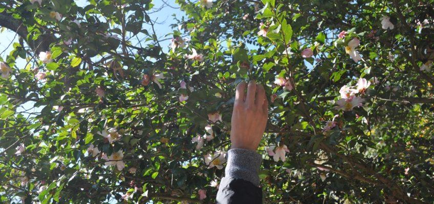 秋の『ショート・リトリートin山水ラボラトリー』は延期